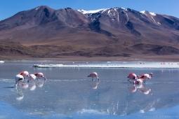 Bolivie - Sud Lipez - 29/07/2015 ©Corentin LAURENT